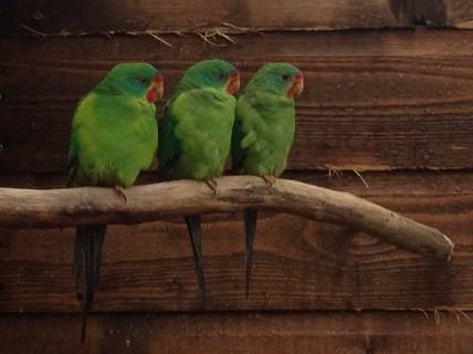 Lakeland Parrot & Bird-keepers A